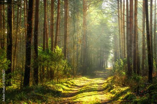 Obrazy kontynenty  wiosenny-krajobraz-lasu