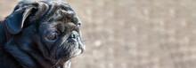 Black Color Pug Head Profile P...