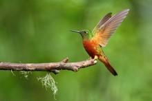 Best Hummingbird In Costa Rica...