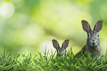 Two Cute Easter Bunny With Green Grass And Green Background
