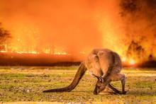 Kangaroo Island, Australia, So...