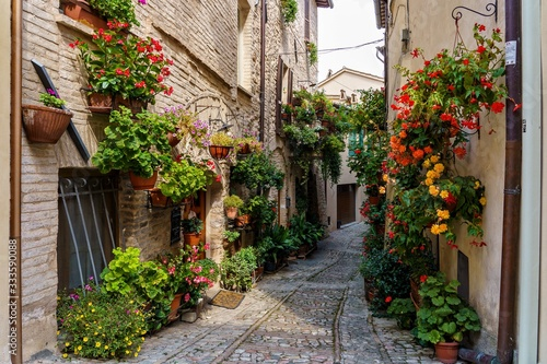 Fototapety, obrazy: Pathway in the middle of buildings with flower pots