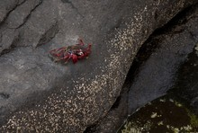 Closeup Shot Of A Red Crab On ...