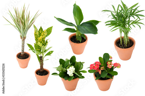 Beautiful mix small house plants palm, bananb, croton in brown and black plastic pot in different type on isolated white and clipping path Wallpaper Mural