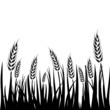 Wheat field background. Cereals icon set with rice, wheat, corn, oats, rye, barley isolated on white background