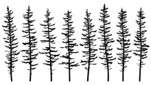 Set Of Vector Silhouettes Of T...