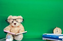 The Lovely Teddy Is Reading A Book