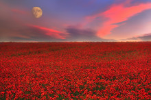 Field With Red Poppies Flowers At Sunset And A Huge Moon. Fantasy Picture With A Fantastic View.