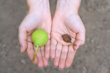 Fresh Green And Dried Pears Li...