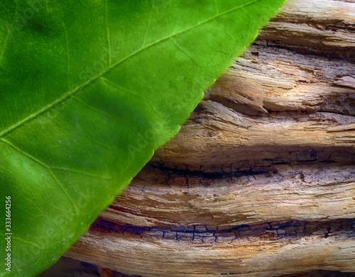 folglia e legno Tapéta, Fotótapéta