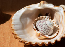 Joyful And Summery Set Of Seashells On A Diffuse And Colorful Background That Evokes The Tranquility And Serenity Of The Environment From Which They Come