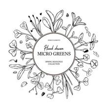 Hand Drawn Micro Greens Botany...
