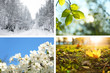 Beautiful photos of nature. Four seasons collage