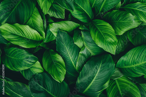 Fototapety zielone  abstract-green-leaf-texture-nature-background-tropical-leaf
