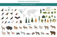 Montane Forest Biome, Natural Region Infographic. Terrestrial Ecosystem World Map. Animals, Birds And Vegetations Ecosystem Design Set