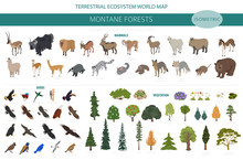 Montane Forest Biome, Natural Region Infographic. Isometric Version. Terrestrial Ecosystem World Map. Animals, Birds And Vegetations Ecosystem Design Set