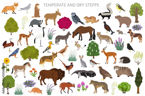 Temperate and dry steppe biome, natural region infographic Canvas Print