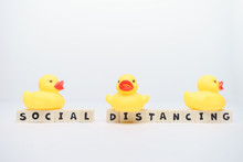 Yellow Rubber Ducks With Socia...