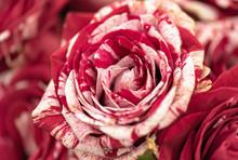 Closeup Image Of Beautiful Flo...