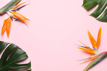 Flat Lay Composition With Bird Of Paradise Tropical Flowers On Pink Background, Space For Text