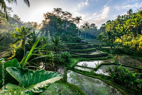 Photo Le risaie balinesi a Ubud