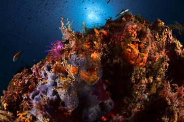 Fototapeta na wymiar Ambiente subacqueo