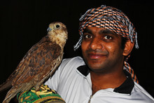 Young Gentile Man With Falcon ...