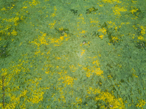 Aerial view of the beautiful yellow goldifelds blossom with Soda Lake Wallpaper Mural