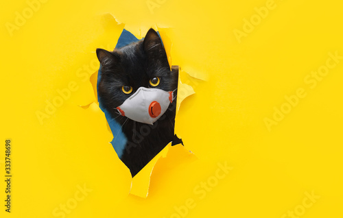 Fotografie, Obraz A funny bug-eyed black cat in a white protective medical mask respirator peeks out of a torn hole in yellow paper