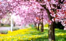 Spring Background - Beautiful ...