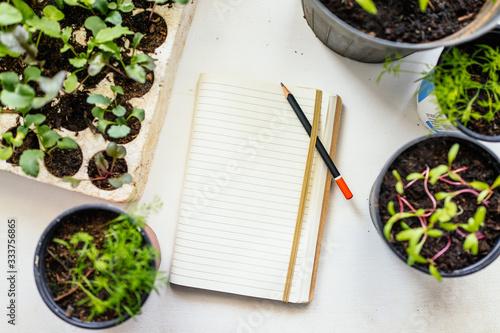 Fototapeta Growing vegetables obraz