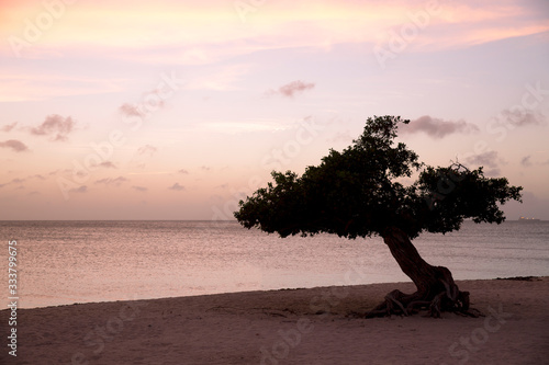 Платно Divi Divi Tree on Eagle Beach in Aruba