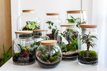 Small Decoration Plants In A G...