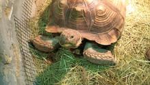 Big Old Turtle And White Rabbi...