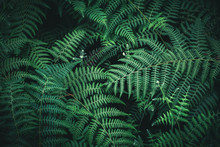 Beautiful Fern Leaves Background
