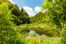 ニュージーランド ウ...