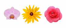 Set Of Rudbeckia, Orchid And B...