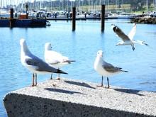 Three Seagulls On The Ledge An...