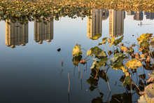 The River Skyline Of The City Park Reflects Its Reflection And The Scene Of The Remnant Lotus Pond