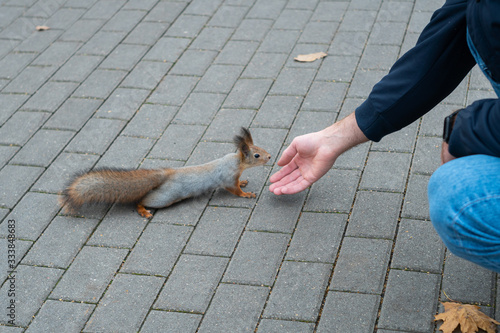 Photo Acquaintance of a squirrel with a man in a city park