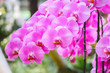 canvas print picture - Beautiful Phalaenopsis Orchid flower blooming in garden floral background
