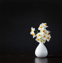 Wild Daffodils In White Vase