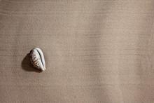 Seashell On The Sea Sand, Copy...