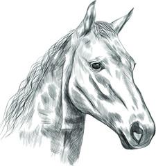 horse black white head sketch  vector illustration