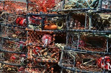 Close Up Of Lobster Cages At T...