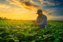 Farmer Using Smartphone In Mun...