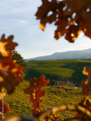 autumn landscape with trees tuscany