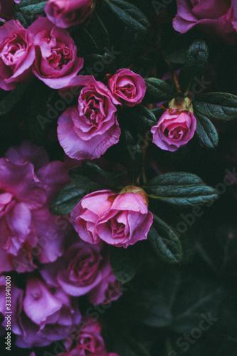 Fototapety, obrazy: wallpaper, botanical garden, flower