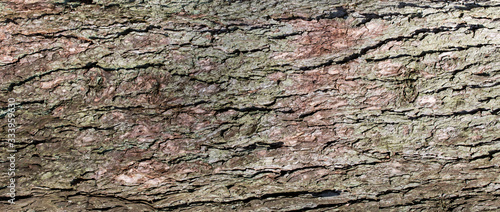 bark of a tree texture background Wallpaper Mural
