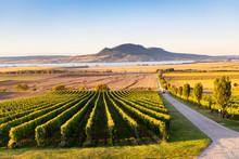 Autumn Vineyards Under Palava ...